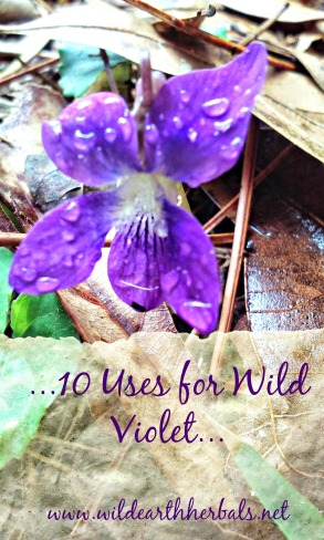wild violet title pic